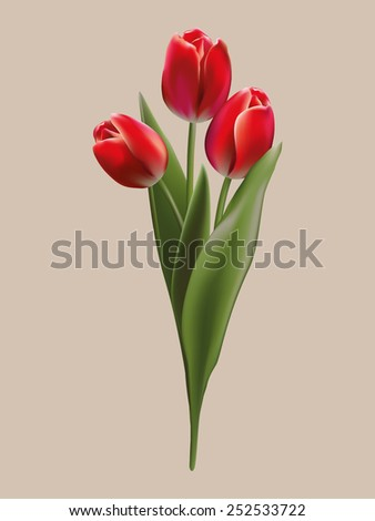 Bouquet of red tulips - stock vector
