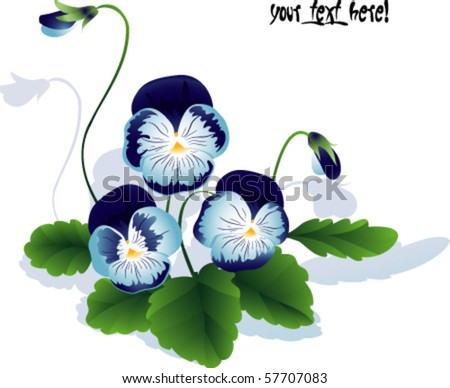 bouquet of summer flower. Pansy with leaves and bud. EPS10 - stock vector