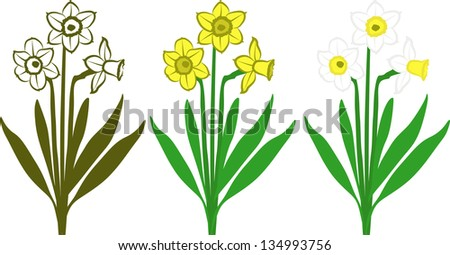 bouquet of white and yellow daffodils - stock vector