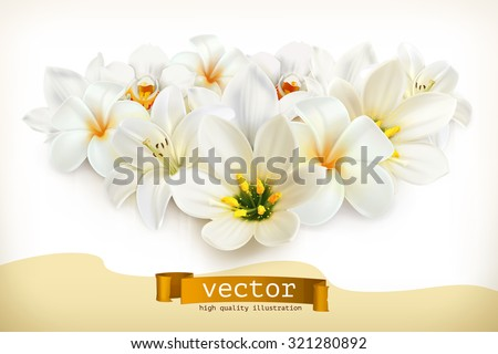 Bouquet of white flowers, vector illustration - stock vector