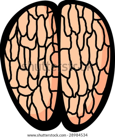 brain - stock vector