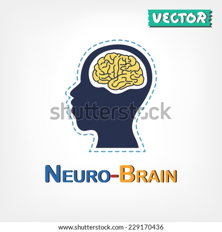 Brain anatomy ( frontal lobe , parietal lobe , temporal lobe , occipital lobe , cerebellum , brain stem ) - stock vector