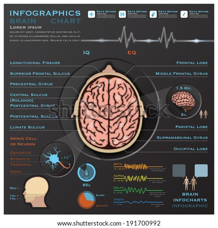 Brain And Nervous System Medical Infographic Infochart Design Template - stock vector