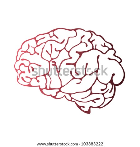 Brain Illustration - stock vector