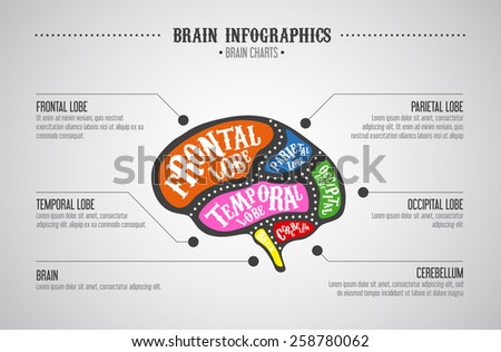 Brain infographics color concept. Vector brain cuts diagram in vintage style.  - stock vector