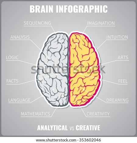Brain left analytical and right creative infographic concept. Art feel dreaming mathematics language facts logic sequential and intuitive. Vector illustration - stock vector