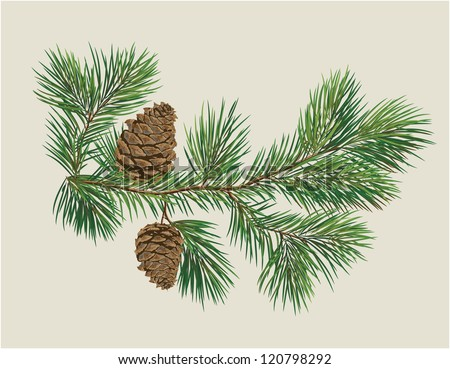 Branch of Christmas tree with pine cones - stock vector