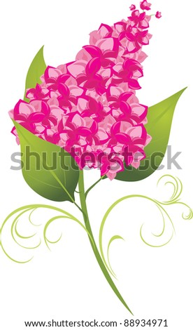 Branch of lilac isolated on the white. Vector