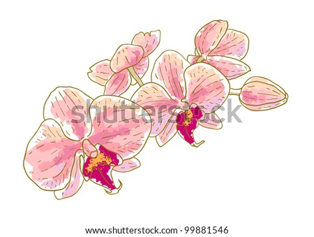Branch of orchids isolated on white background - stock vector
