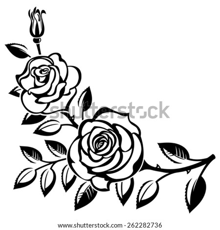 Branch of roses on a white background - stock vector
