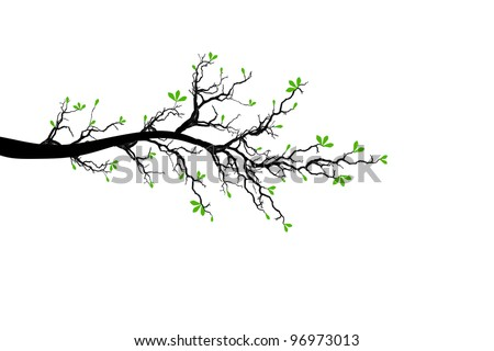 Branch of spring tree isolated on white background - stock vector
