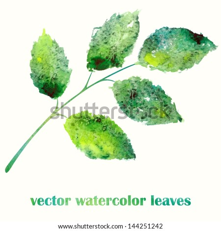 Branch with green leaves. Watercolor summer illustration. - stock vector