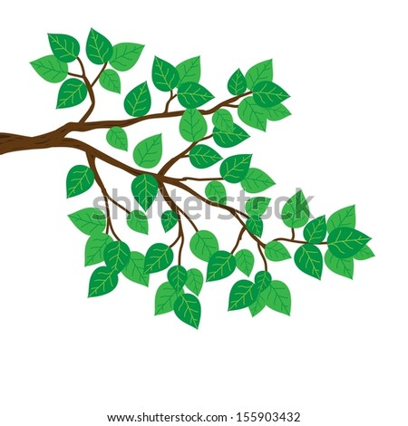 Branches with green leaves of spring. Illustration. - stock vector
