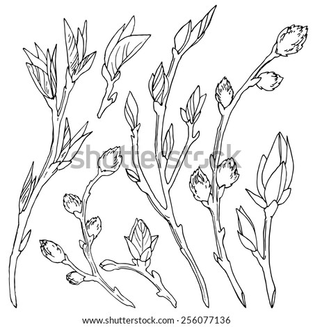 Branches with leaves and buds set of spring blooming branches, hand-drawn design elements, sketches on white background. - stock vector