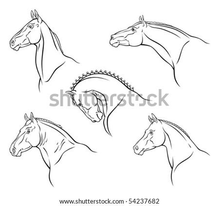 Breed of horse - stock vector