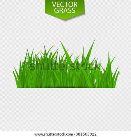 blade of grass vector - photo #40