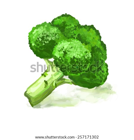 Broccoli vegetable vector illustration  hand drawn  painted watercolor - stock vector