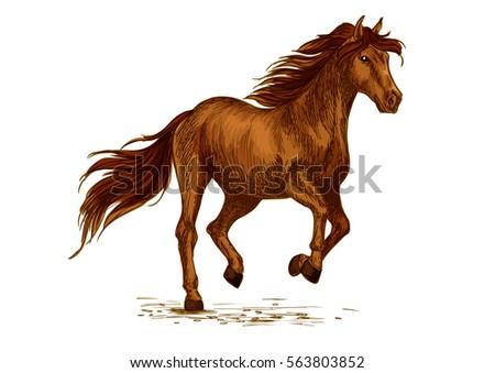 Brown Arabian Mustang Horse Running Racing Stock Vector 563803852
