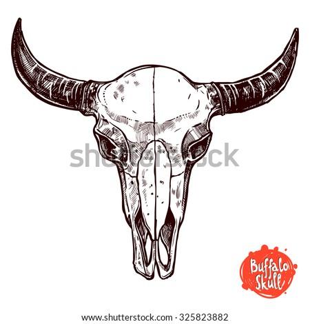 Buffalo Skull Hand Drawn Sketch - stock vector