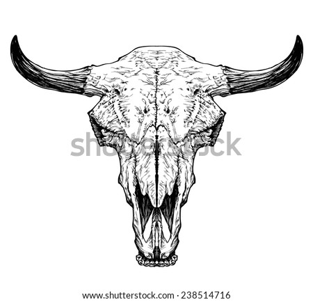 Bull / auroch skull with horns on white background. - stock vector