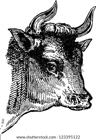bull's head - stock vector