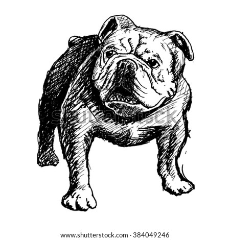 bulldog sketch - vector - stock vector