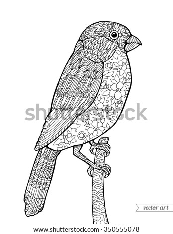 Bullfinch Bird Vintage Floral Pattern Vector Coloring Book Page For Adult Zentangle