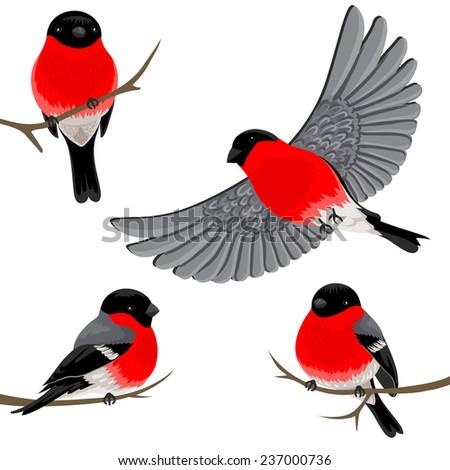 Bullfinches. Vector set. - stock vector