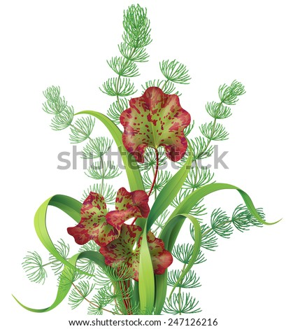 Bunch of different aquatic plants isolated on white. - stock vector