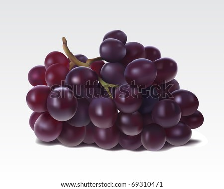 Bunch of grapes isolated in white - stock vector