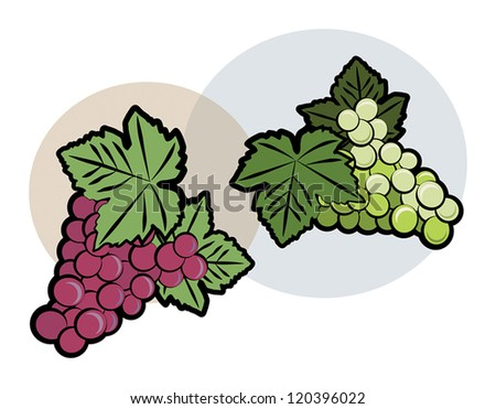 Bunch of green and red grapes, vector illustration - stock vector