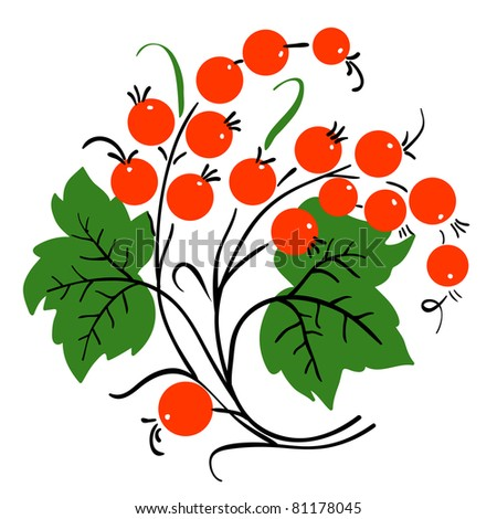 Bunch of red currant. Ripe berry. Vector - stock vector