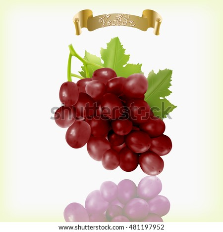 Bunch of red grapes with vine leaves isolated on white background. Realistic, fresh, natural food, dessert. 3d vector illustration for agriculture design.