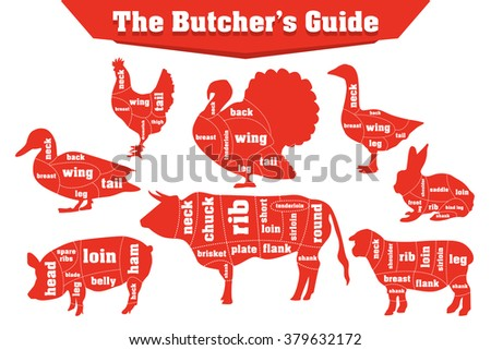 Butcher meat cuts infographic set, vector illustration - stock vector