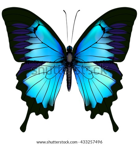 Butterfly. Blue butterfly papilio ulysses (Mountain Swallowtail) isolated vector on white background - stock vector