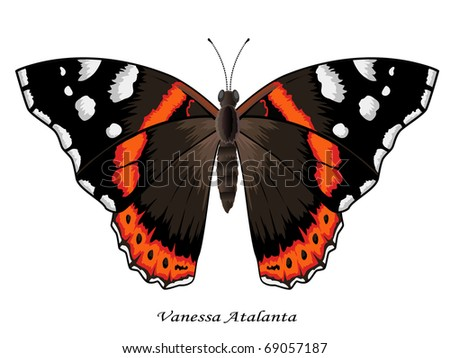 Butterfly collection, Vanessa Atalanta, vector illustration. More butterflies in my portfolio. - stock vector