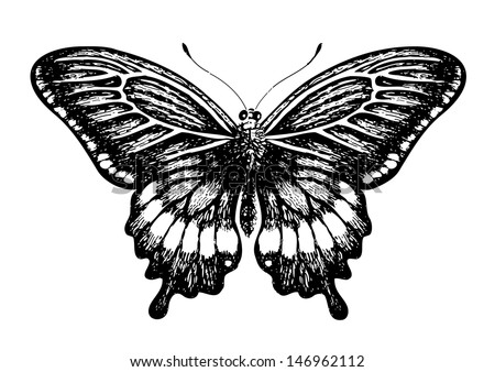 Butterfly, graphic style, hand drawn, black and white isolated vector illustration - stock vector