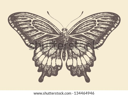 Butterfly, graphic style, hand drawn, vector illustration - stock vector