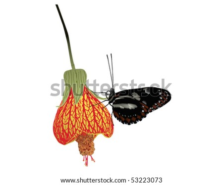 Butterfly on the side of an exotic flower - stock vector