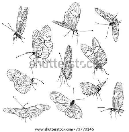 butterfly sketch collection - stock vector