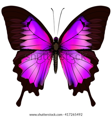 Butterfly. Vector illustration of beautiful pink and purple butterfly isolated on white background - stock vector