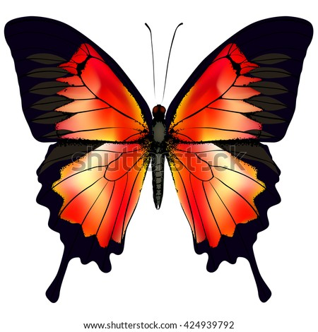 Butterfly. Vector illustration of beautiful red butterfly isolated on white background - stock vector