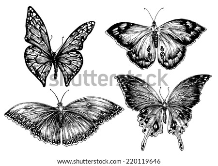 Butterfly vector set - stock vector