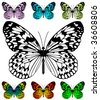 Butterfly vector template with samples. Easy editable wings color. Paper Kite or Rice Paper butterfly, Idea leuconoe species. - stock vector