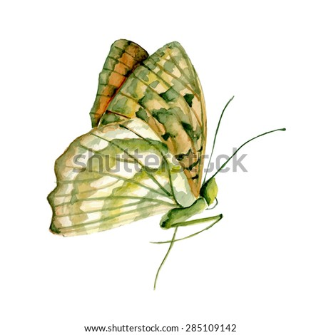 Butterfly watercolor drawing. Vector illustration
