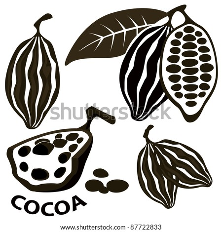 Cacao bean - stock vector