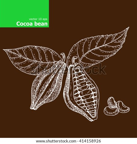 Cacao beans Illustration. - stock vector