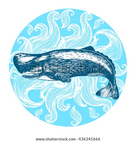 Apologise, Sperm whale illustrations about
