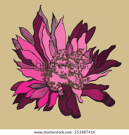Cactus flower, hand-drawing. vector illustration. - stock vector