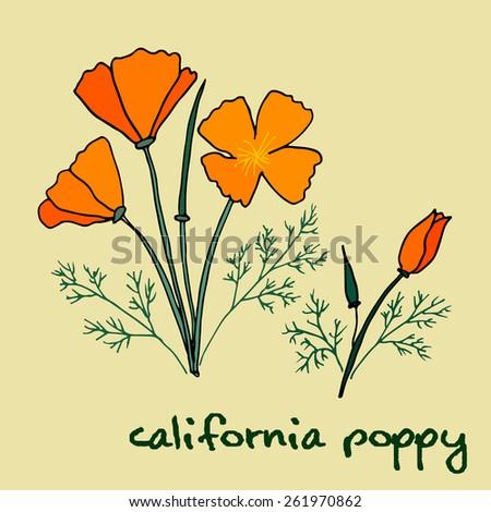 california poppy flowers - stock vector